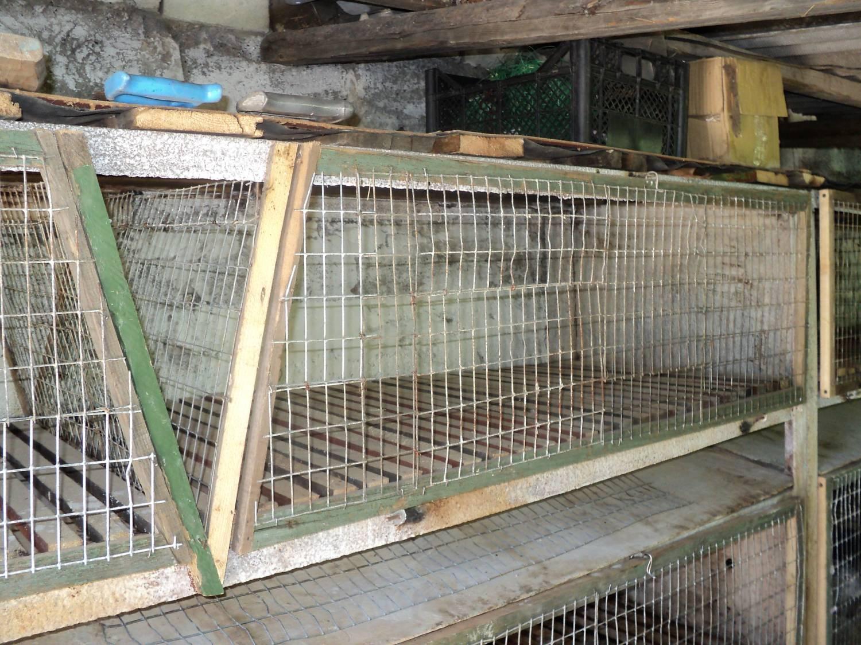 Стоимость выращивания кроликов